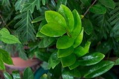 Sluit omhoog groene bladeren Royalty-vrije Stock Fotografie