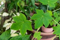 Sluit omhoog groene bladeren Royalty-vrije Stock Foto