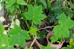 Sluit omhoog groene bladeren Royalty-vrije Stock Afbeelding