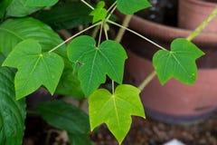 Sluit omhoog groene bladeren Stock Afbeeldingen