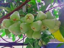 Sluit omhoog Groene Rose Apple On de Boom royalty-vrije stock afbeelding