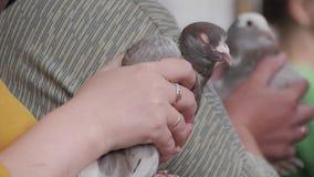 Sluit omhoog handen zorgvuldig houdend een duif stock videobeelden