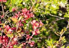 Sluit omhoog heldere mooie roze en gele bloeiende bloemen en heldergroene bladeren in het park royalty-vrije stock foto's