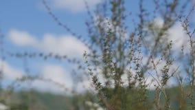 Sluit omhoog het landschap van de ecologieaard Bloeiend groen bos op het licht van de de lentezonsondergang Macro van grond in he stock videobeelden