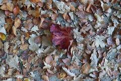 Sluit omhoog hoge resolutieoppervlakte van de herfstbladeren ter plaatse stock afbeeldingen
