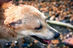 Sluit omhoog Hond headshot, uitstekende Stijl royalty-vrije stock afbeelding