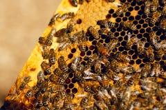 Sluit omhoog honingraat in houten bijenkorf met het werk bewegende bijen op het Het concept van het bijenteeltlandbouwbedrijf royalty-vrije stock afbeeldingen