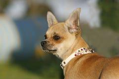 Sluit omhoog hoofd van een hond Stock Afbeeldingen