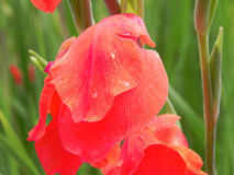 Sluit omhoog hoog volledig het kaderdetail van de hoekmening van oranje bloembloemblaadjes Stock Foto's