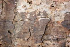Sluit omhoog houten textuur Stock Foto
