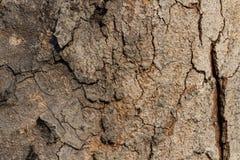 Sluit omhoog huid van droog hout Stock Foto's
