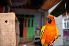 Sluit omhoog ik ben gekleurde papegaai Royalty-vrije Stock Afbeelding