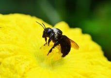 Sluit omhoog insect Royalty-vrije Stock Afbeeldingen