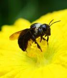 Sluit omhoog insect Stock Foto