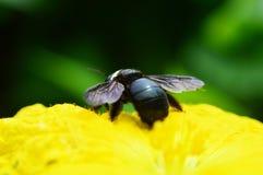 Sluit omhoog insect Stock Fotografie