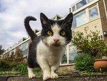 Sluit omhoog kat op de straat stock fotografie