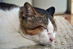 Sluit omhoog kattenslaap stock foto
