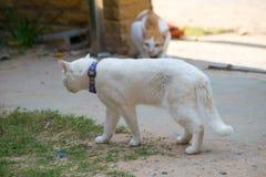 Sluit omhoog kattenstrijd Royalty-vrije Stock Foto