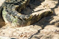 Sluit omhoog Krokodilstaart stock foto
