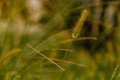Sluit omhoog landelijke wildflowers in de binnenlandse tuin bij schemer Royalty-vrije Stock Foto's
