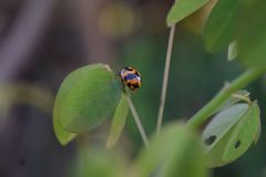 Sluit omhoog lieveheersbeestjes op vage achtergrond Royalty-vrije Stock Foto
