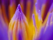 Sluit omhoog lotusbloem Royalty-vrije Stock Foto's