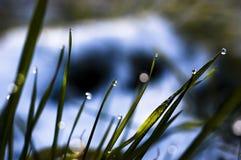 Sluit omhoog, macro van dauwdalingen op bladen van vers gras, ochtendstralen van zon, waterbesparing en groen concept, sparen vag royalty-vrije stock foto's