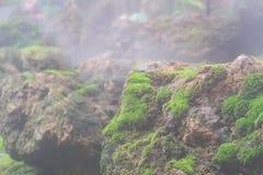 Sluit omhoog macro van het mooie gezonde mos groeien op rots op een mistige dag wordt geschoten die De groene achtergrond van het royalty-vrije stock afbeelding