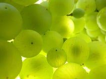 Sluit omhoog Macro van Rijpe Doorzichtige Druivencluster op Wijnstok Stock Foto's