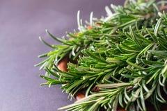 Sluit omhoog macro van vers groen rozemarijnkruid dat wordt geschoten stock fotografie