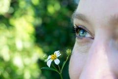 Sluit omhoog macrobeeld van een groenachtig blauw die oog van een jong vrouwengezicht wordt geïsoleerd met een madeliefjebloem stock foto's