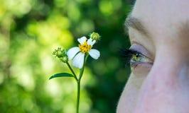 Sluit omhoog macrobeeld van een groenachtig blauw die oog van een jong vrouwengezicht wordt geïsoleerd met een madeliefjebloem royalty-vrije stock afbeeldingen
