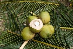 Sluit omhoog mening van aardige verse kokosnoot Stock Foto's