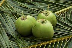 Sluit omhoog mening van aardige verse kokosnoot Royalty-vrije Stock Foto's