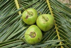 Sluit omhoog mening van aardige verse kokosnoot Royalty-vrije Stock Afbeeldingen