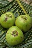 Sluit omhoog mening van aardige verse kokosnoot Stock Foto