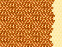 Sluit omhoog mening van de het werk bijen op honingscellen Stock Fotografie
