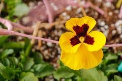 Sluit omhoog mening van gele bloemen in stadstuin royalty-vrije stock afbeeldingen