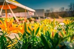 Sluit omhoog mening van gele bloemen in stadstuin royalty-vrije stock foto's