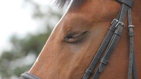 Sluit omhoog mening van het oog van een mooi bruin paard Het paardenoog knipperen Langzame Motie stock footage
