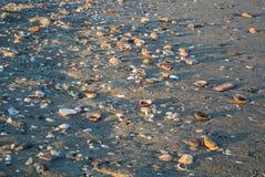 Sluit omhoog mening van strand in de avond met diverse shells, stenen, zand en snak schaduwen Stock Foto's