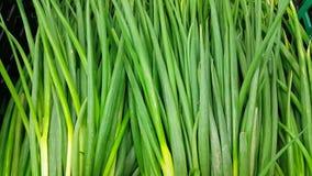 Sluit omhoog mening van weelderige groene bladeren van uien Plantaardige achtergrond stock video