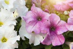 Sluit omhoog met en roze bloem Stock Foto's