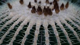 Sluit omhoog mooie cactus met kleine bloemen Stock Foto's