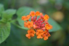 Sluit omhoog mooie oranje bloemen Royalty-vrije Stock Foto