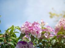 Sluit omhoog mooie roze bloemen en groene bladeren tegen blauwe hemelachtergrond stock foto's