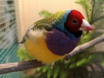 Sluit omhoog Mooie vogel kleurrijke zitting op de toppositie met een onduidelijk beeldachtergrond royalty-vrije stock foto's
