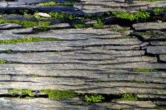 Sluit omhoog mos en installaties op hout voor achtergrond royalty-vrije stock foto's