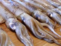 Sluit omhoog ontsproten van rij van pijlinktvis royalty-vrije stock foto