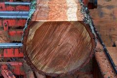 Sluit omhoog op boomboomstam die voor timmerhout op een zaag worden gesneden royalty-vrije stock foto's